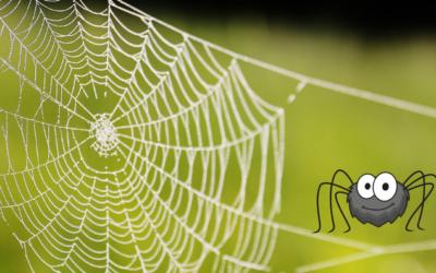 Ik heb de kwaliteiten van een spin