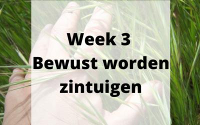 Week 3 – Bewust worden zintuigen